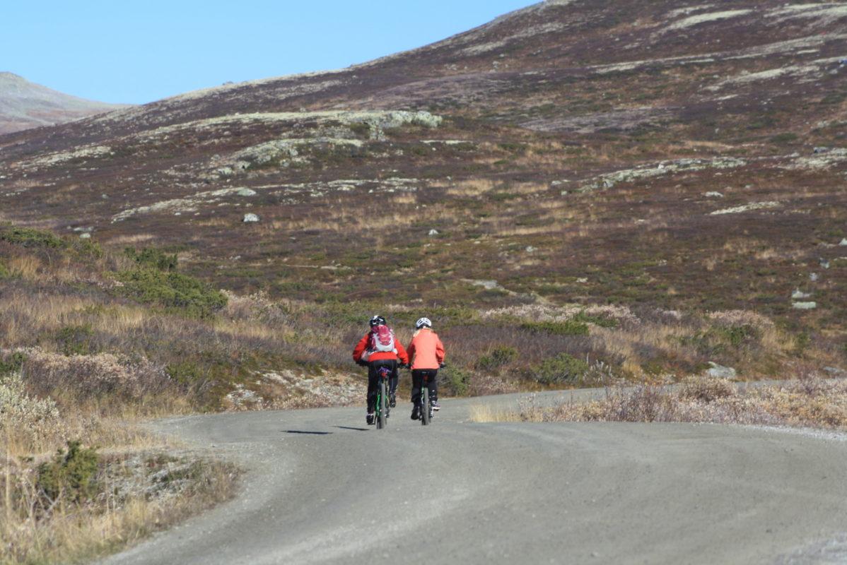 sykkel skarveheimen